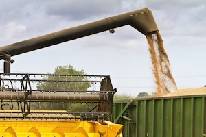 grain auger accident